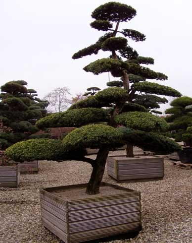 Etagenbaum
